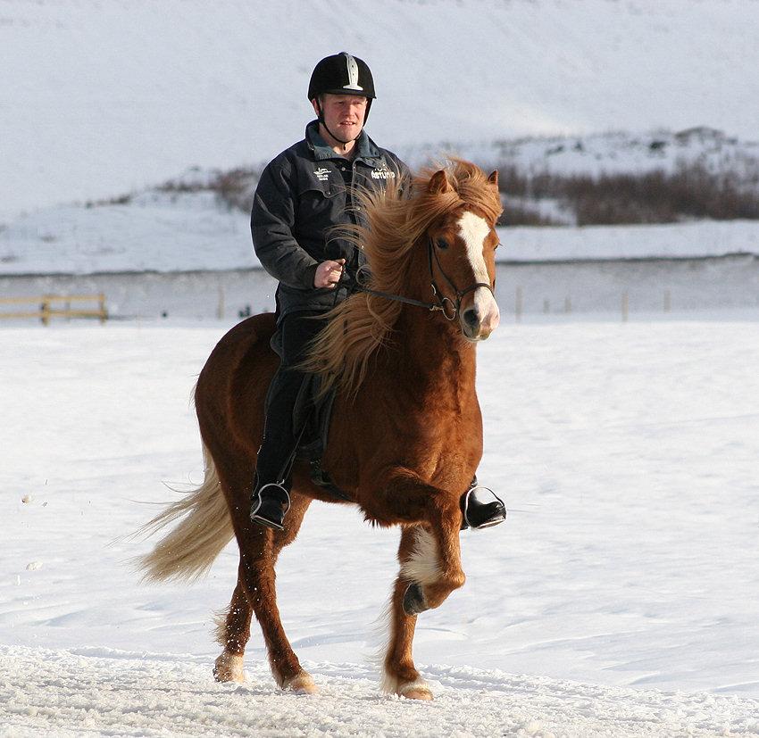 IS2004265998 Frökk frá Akureyri